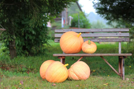 pumpkin outdoor nature autumn in sunny summer day on village Stock Photo
