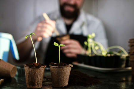gardener hand sprout table Stock Photo