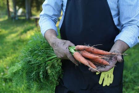 gardener man holding carrot harvest in a hand Stock Photo