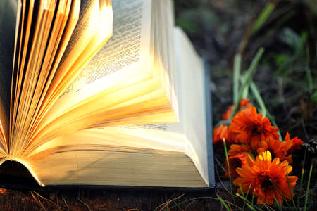 bible flower: various objects of the summer season in the best of this wonderful period Stock Photo