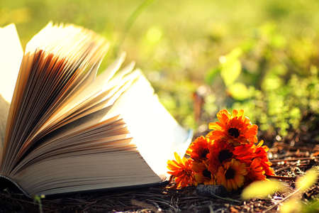 bible flower: open book with flower on grass Stock Photo
