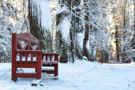wood bench in winter Stock Photo