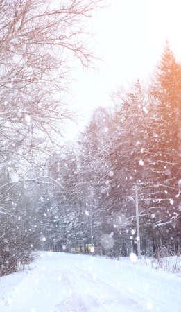 Winter landscape snow covered expanses. A park in the winter in the snow. Road on winter day.  Stock Photo
