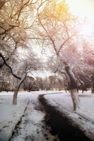 park alley tree way winter