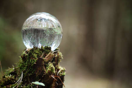 Crystal ball. A magical accessory in the woods on the stump.