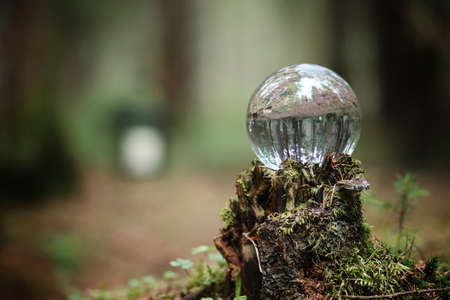 Crystal ball. A magical accessory in the woods on the stump. Rit