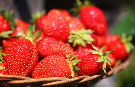 fresh strawberry outdoor