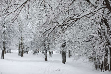 Winter landscape. Forest under the snow. Winter Park. Stockfoto - 129471230