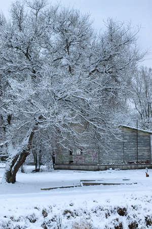winter snow on tree PARK
