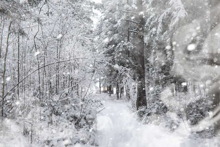 Winter landscape. Forest under the snow. Winter Park. 写真素材