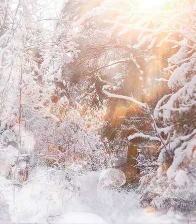 Winter landscape. Forest under the snow. Winter Park. Reklamní fotografie