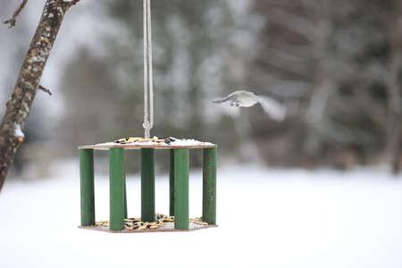 Little titmouse on the trough eats seeds. Winter bird. 写真素材