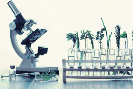 Microscope and partings on the table in the laboratory. Study on GMOs in greens. Standard-Bild - 129471820