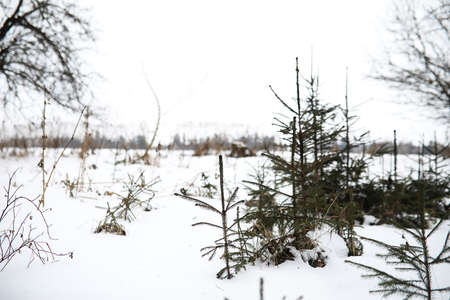 Winter landscape of country fields and roads Stockfoto - 129471813
