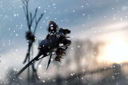 lanscape snow on grass macro tree winter Stockfoto - 129471784