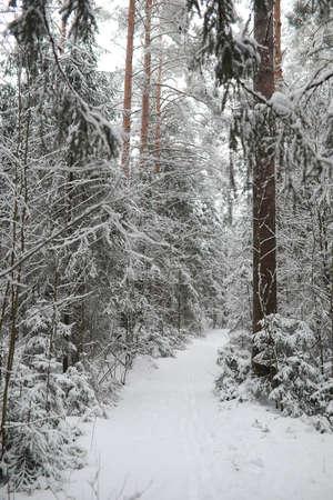 Winter landscape. Forest under the snow. Winter Park. Stockfoto - 129471714