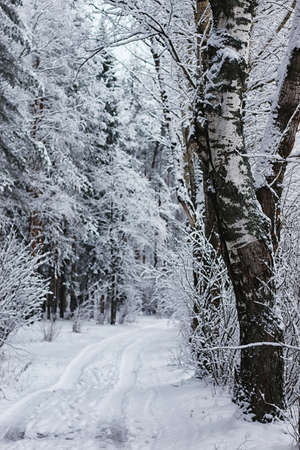 winter forest covered snow Stockfoto - 129471750