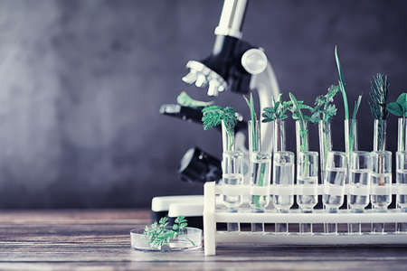 Microscope and partings on the table in the laboratory. Study on GMOs in greens. Standard-Bild - 129471747