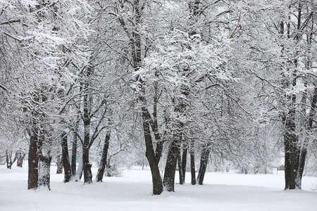 Winter landscape. Forest under the snow. Winter Park. Stockfoto - 129471802