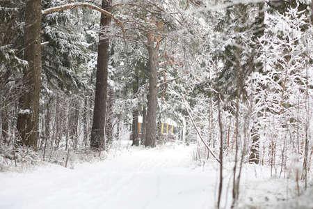 Winter landscape. Forest under the snow. Winter Park. Stockfoto - 129471482