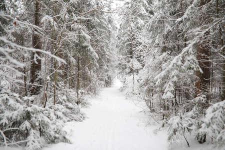 Winter landscape. Forest under the snow. Winter Park. Stockfoto - 129471322