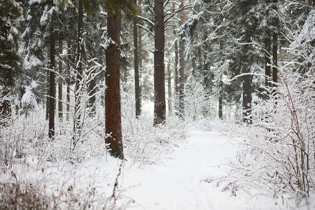 Winter landscape. Forest under the snow. Winter Park. Stockfoto - 129471217