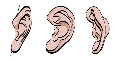 Human ear. Vector illustration. Front, back and side view. Isolated on white.