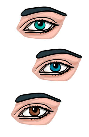 Human eye. Vector illustration. Front and side. Isolated on white. Blue, green and brown eye pupil.
