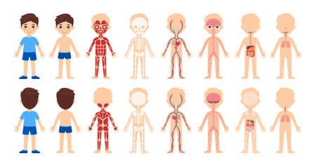 Set of isolated cartoon boys and human body system.Front and back views. Body anatomy, education for children. Skeleton, muscles, circulatory, nervous, digestive, respiratory systems. Cartoon style. Vector.