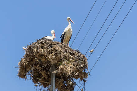 White storks nest Bulgarian village. Blue sky on background. Фото со стока