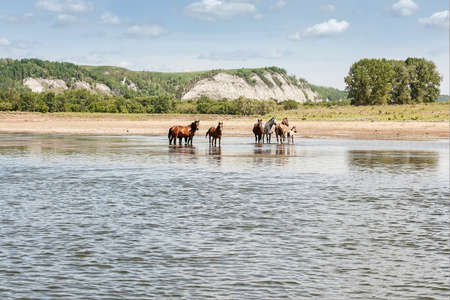 Horses at the river on mountains and blue sky background Фото со стока