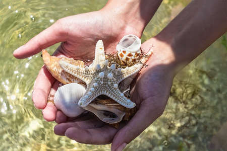 seashells in hand on the beach