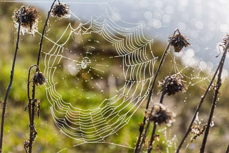 autumn web, at the river