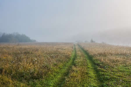 road in fog, autumn