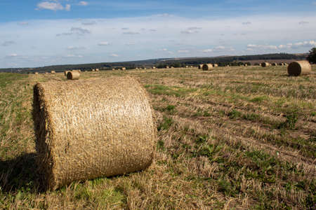 Field with mown grass and collected in large rolls for pet food.