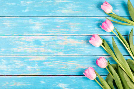 View of pink tulips on a blue wooden background. Reklamní fotografie