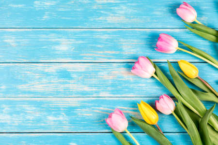 View of pink and yellow tulips on a blue wooden background.