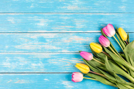 View of bunch of pink and yellow tulips on a blue wooden background. Reklamní fotografie