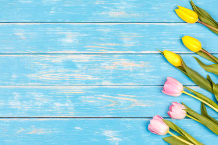 View of yellow and pink tulips lying on a blue wooden background