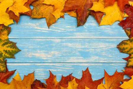 View of autumn maple leaves on blue wooden background Stock Photo