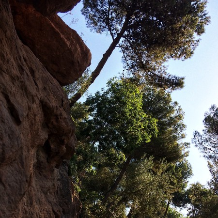 tree over a precipice, tree grows on the edge of the abyss in the park Фото со стока
