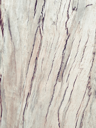eucalyptus bark as background, wood texture