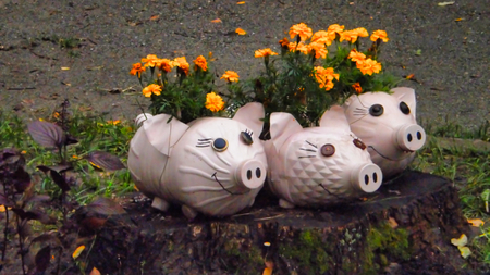 flowerpots made from plastic bottles, marigolds, flowerpots in the shape of a pig, recycling garbage
