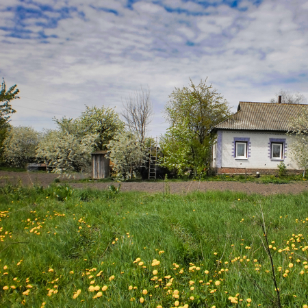 meadow with blooming flowers near shack, spring landscape