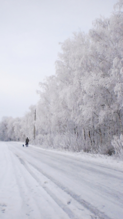 snow-covered winter road, birches in hoarfrost, winter landscape, soft focus