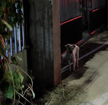 Little pathetic stray dog with sad eyes. Stray dog with tousled hair. Sad shabby dog on the night street. Night scene