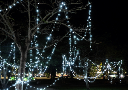 Lighting garlands sprawled on trees and bushes. New Year decoration. Night scene