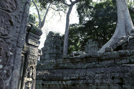 Aerial roots of huge ficus on stone ruins. Banyan tree and the ruins of an ancient civilization.