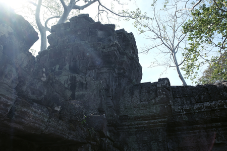 The suns rays make their way through the branches of the tree, illuminating the ruins of ancient buildings. Sunny bunnies.