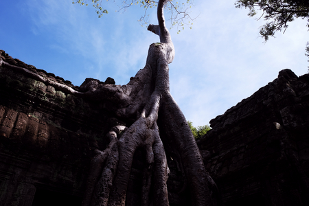Ancient building braided by the roots of a huge tree. Dilapidated building of the Khmer Empire. The ruins of ancient civilizations.